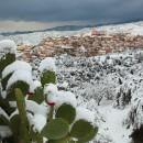 08_Fichi d'india con neve
